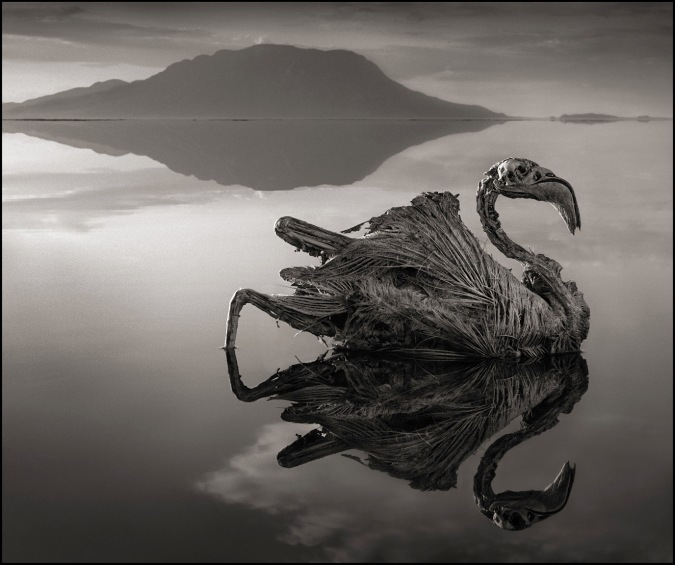 PETRIFIED FLAMINGO, LAKE NATRON, 2010